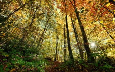 Investir dans les terres agricoles et les groupements forestiers